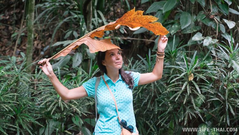 Сухой лист где-то в джунглях Борнео можно использовать как зонт