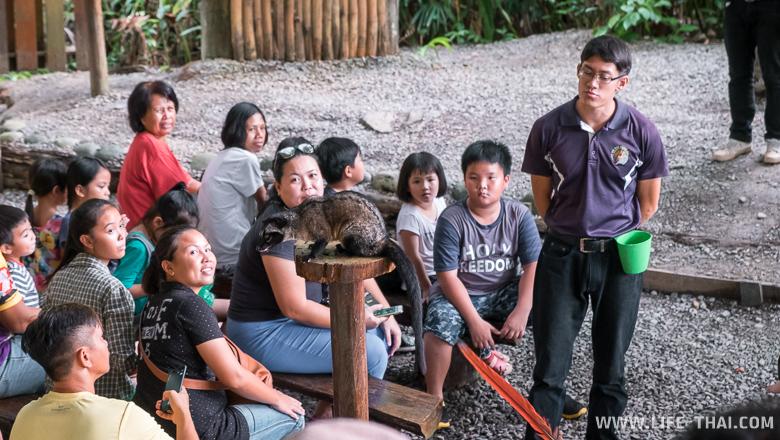 Зверёт Лювак, остров Борнео, Малайзия