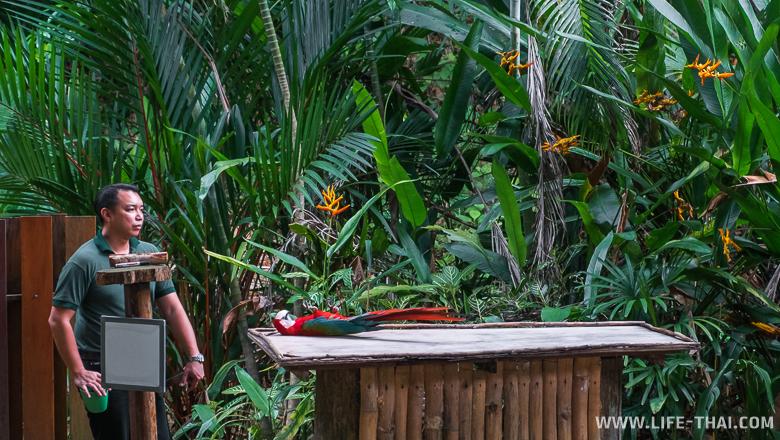 Попугай прикидывается дохлым, Кота-Кинабалу, Малайзия