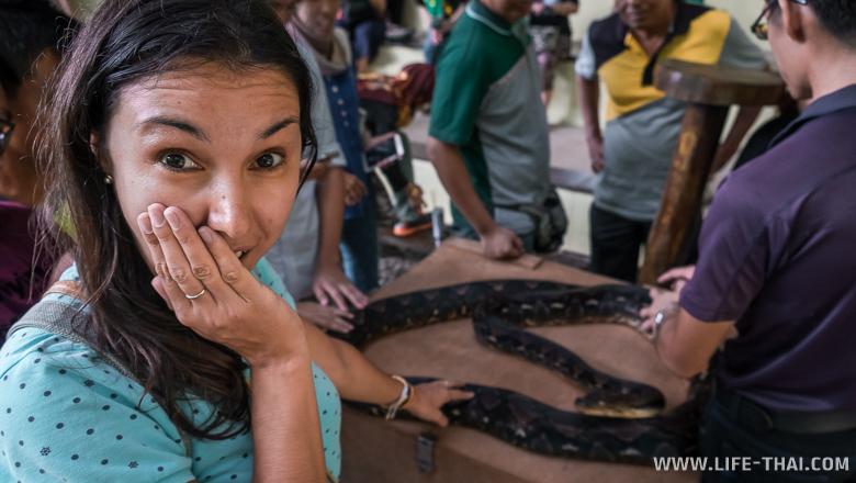 Змеи острова Борнео, Малайзия