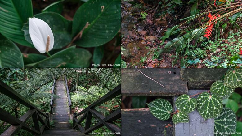 Ботанический сад в парке Лок Кави, Кота Кинабалу, фото
