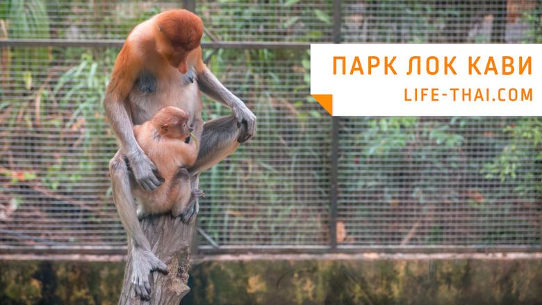 Парк Лок Кави в Кота Кинабалу на острове Борнео, достопримечательности Малайзии
