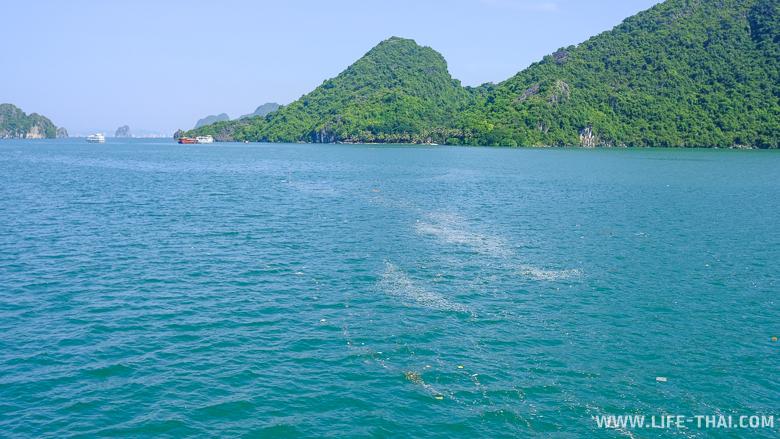 Мусор в заливе Халонг - проблема и угроза экосистеме бухты