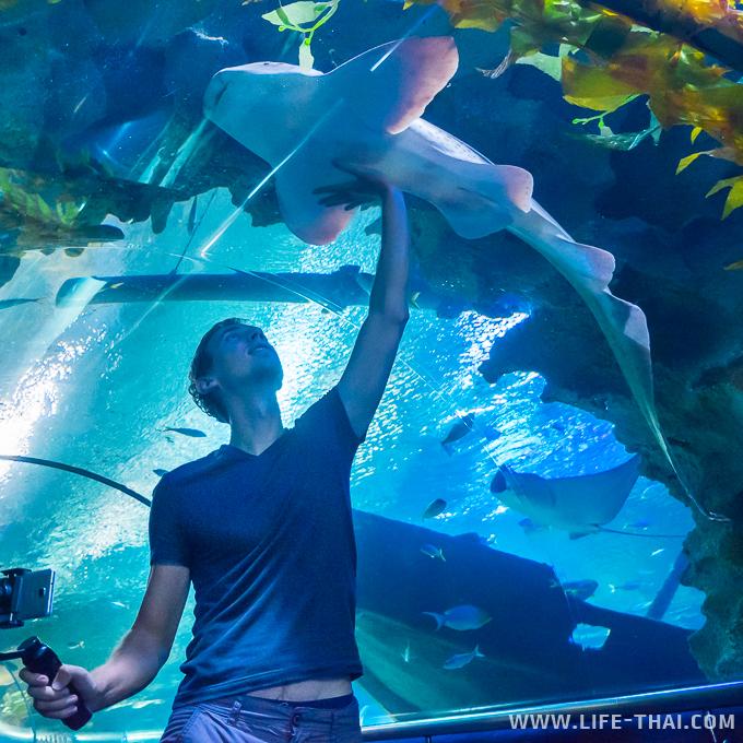 Акула в океанариуме KLCC, Куала Лумпур, Малайзия