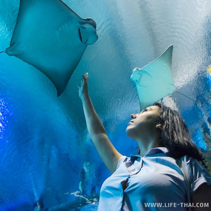 Скат в океанариуме KLCC, Куала Лумпур, Малайзия
