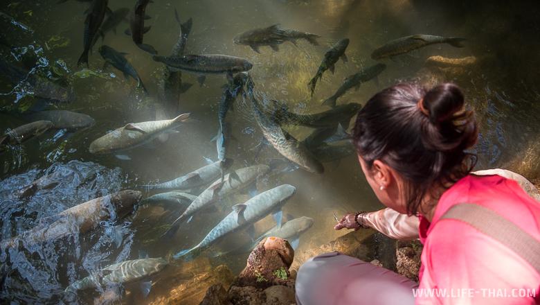 Кормлю огромных рыб в заповеднике