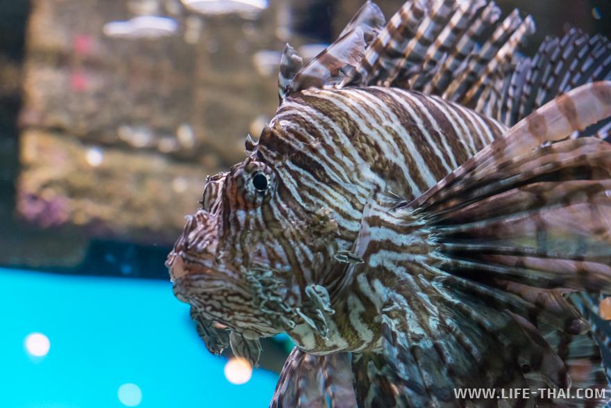 Рыбы в аквариуме KLCC
