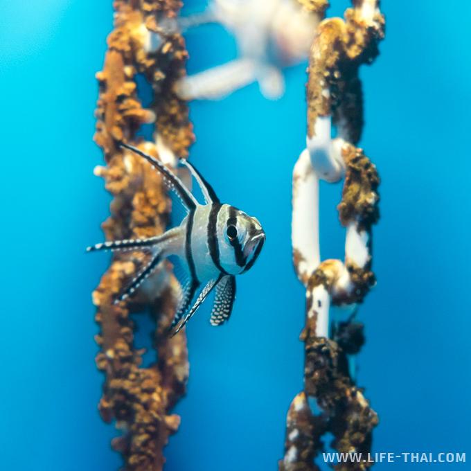 Рыбки в аквариуме в Куала Лумпуре