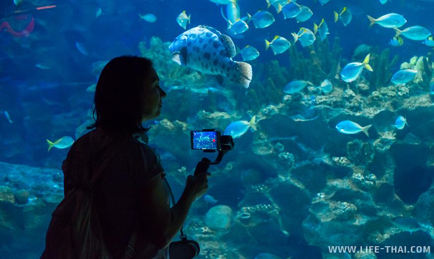 Я на фоне огромного аквариуме в Aquaria KLCC