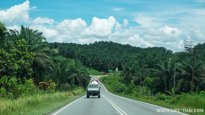 Дорога к пещерам Гоматонг из Сандакана