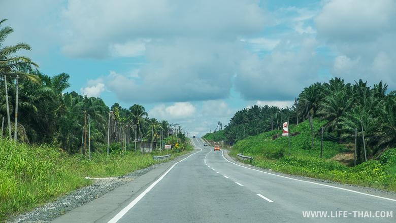 Плантации масличной пальмы, остров Борнео, Малайзия