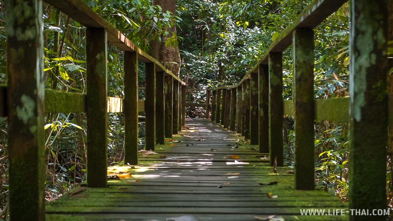 Деревянный помост, ведущий к пещерам Гоматонг. Сабах, Малайзия