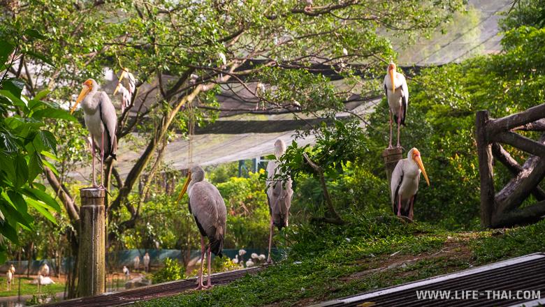 Одна из достопримечательностей Куала Лумпура - парк птиц