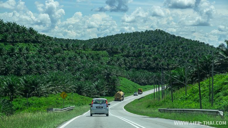 Плантации масленичной пальмы в штате Сабах, Малайзия