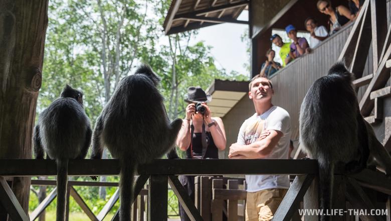 Заповедник обезьян-носачей на Борнео (Сандакан), Малайзия