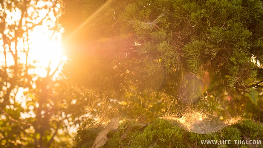 Лучи солнца играют на паутине
