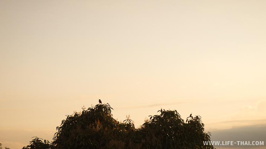 Птица сидит на верхушке дерева