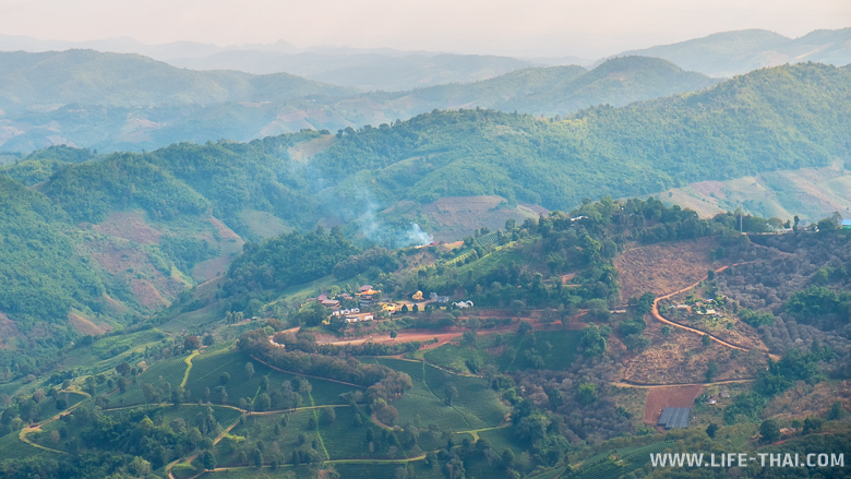 Чайные плантации в Мэсалонге, север Таиланда