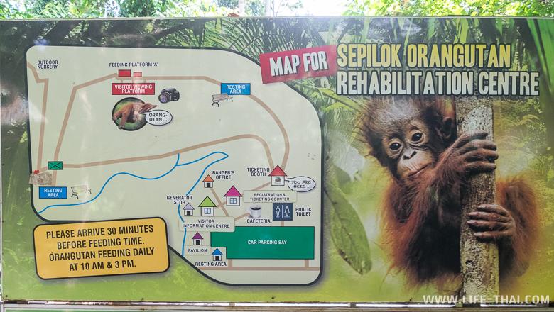 Карта центра реабилитации орангутангов в Сепилоке, Малайзия
