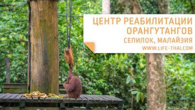 Поездка в Сепилок: Центр реабилитации орангутангов, Центр защиты солнечных медведей и Центр исследований дождевых лесов. Полезная информация, как добраться, что посмотреть