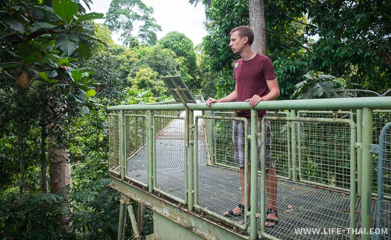 Игорь на canopy walk высматривает птиц