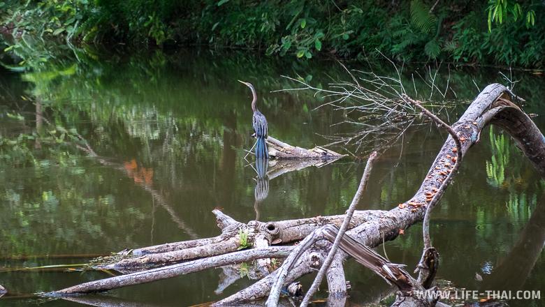 Птица сидит на ветке дерева в Центре исследований дождевых лесов Борнео