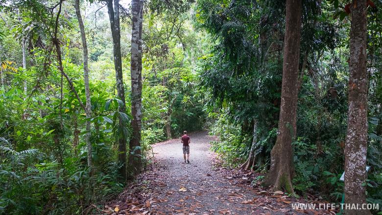 Игорь идёт по тропинке среди исполинских деревьев