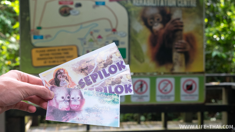 Сколько стоит посещение реабилитационного центра орангутангов в Сепилоке?