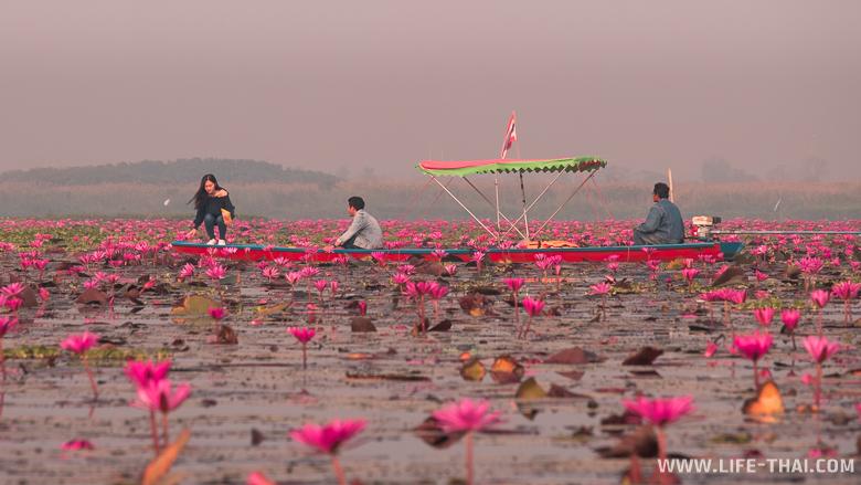 Тайцы в гуще лотосов делают селфи
