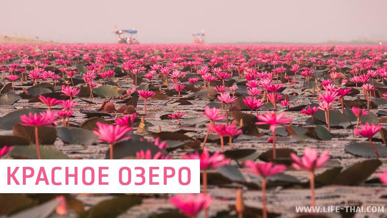 Красное озеро лотосов - одна из самых красивых достопримечательностей Удон Тхани