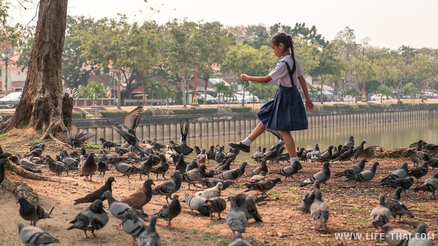 Девочка гоняет голубей в парке Праджак в Удон Тхани