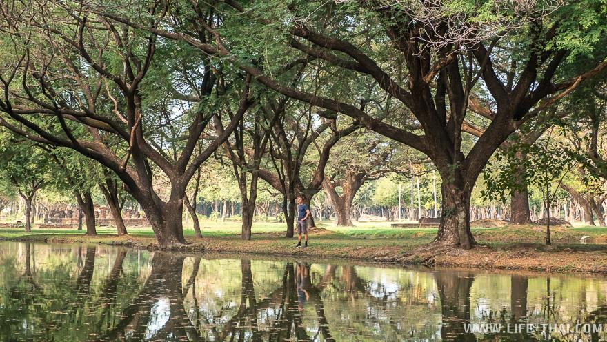 Игорь отдыхает в тени раскидистых деревьев
