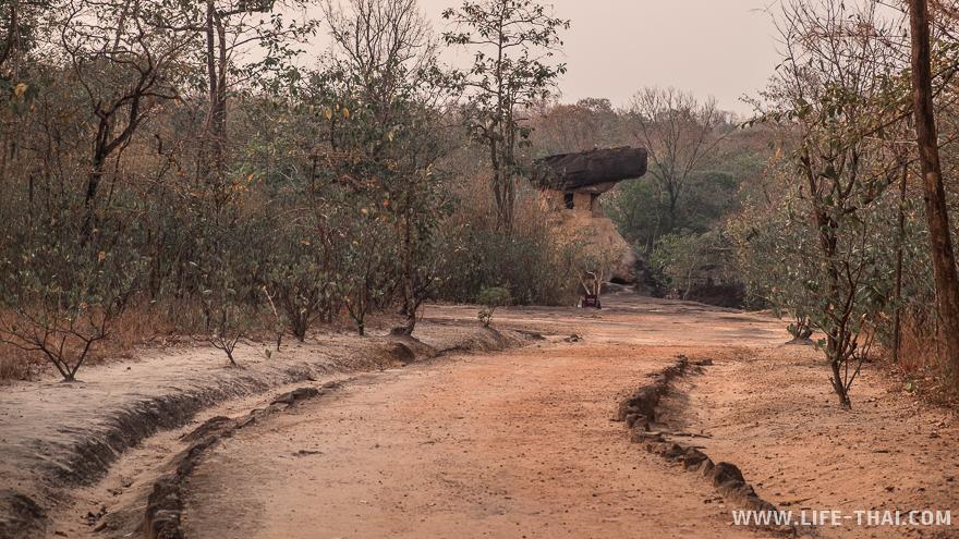 Hor Nang U-Sa притаился среди непривычно для Таиланда низкорослых деревьев