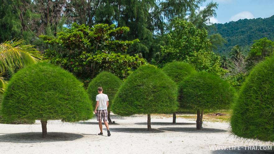 Игорь такой маленький среди невысоких, но пышных деревьев на Малибу бич