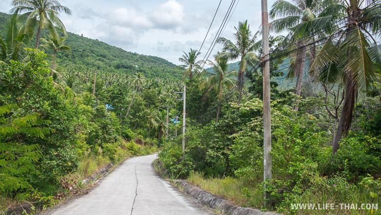 Узкая бетонка - хорошая дорога для Пангана