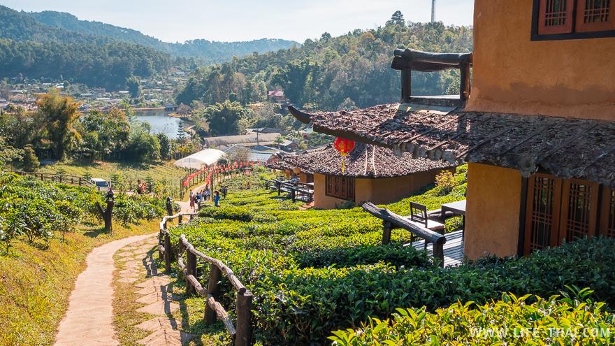 Бунгало посреди чайных плантаций