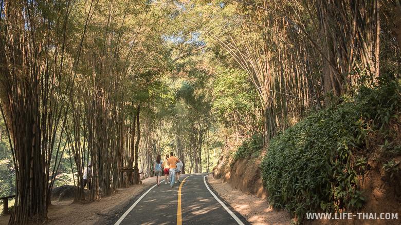 Дорога, над которой живописно смыкается бамбук
