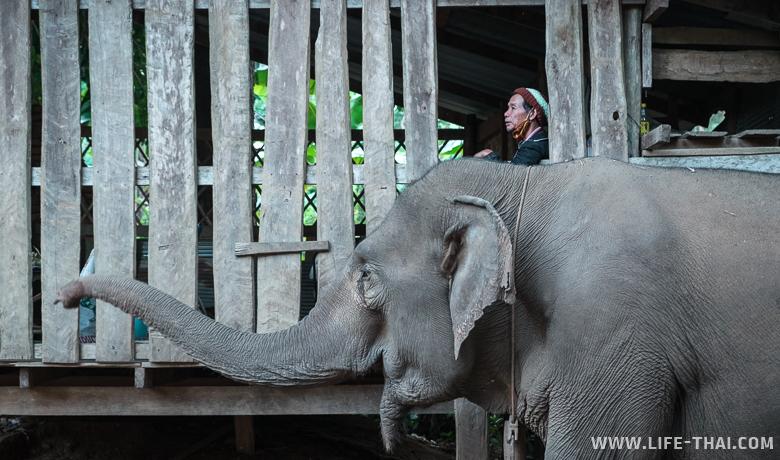 Слон, которого я не заметила