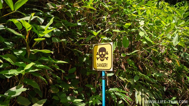 Опасно ли водить мотобайк на острове Чанг?