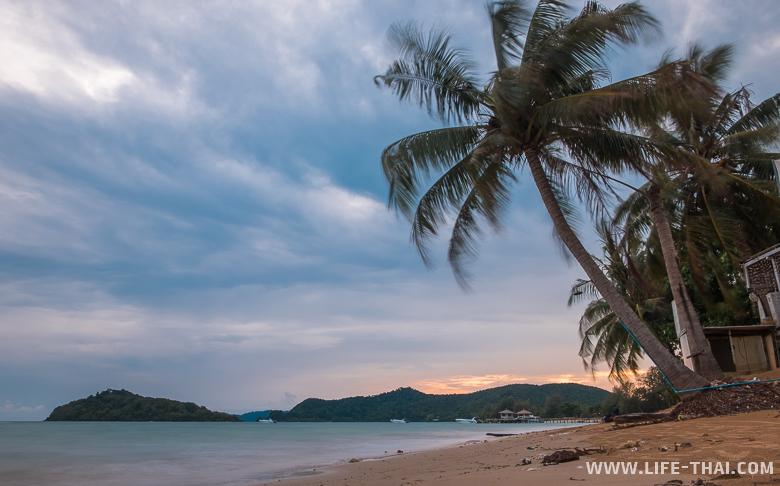 Пальма на закате на острове ко Мак, Таиланд