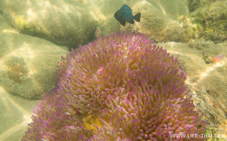 Подводный мир на ко Куде