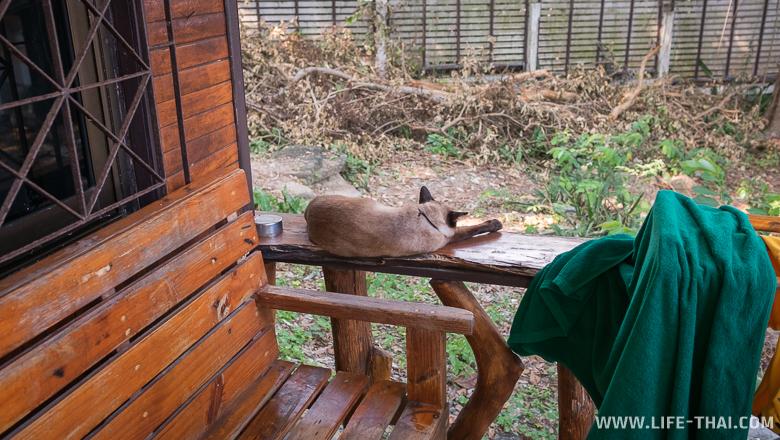 В наше бунгало в Pudsa resort постоянно приходил сиамский кот