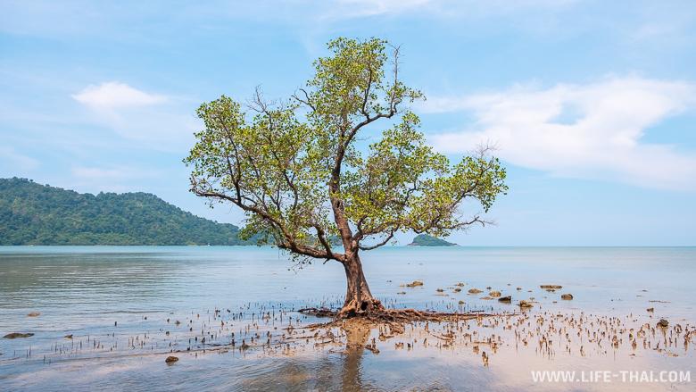 Природа ко Чанга