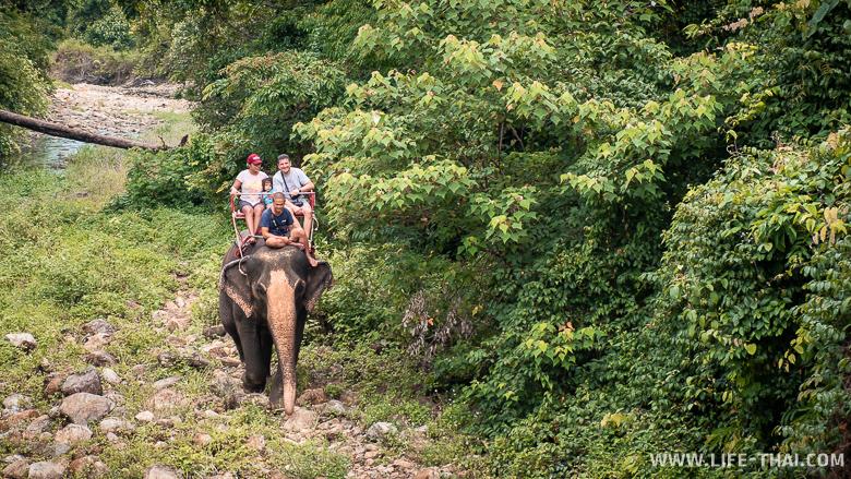 Слоны на ко Чанге - аттрибут отдыха