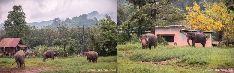 Слоновья ферма на ко Чанге