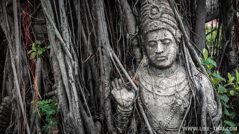 Статуя, обвитая корнями дерева в Бангкоке, Таиланд