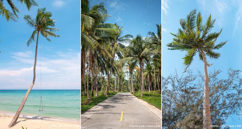 Отдых на ко Куде - кокосовые пальмы