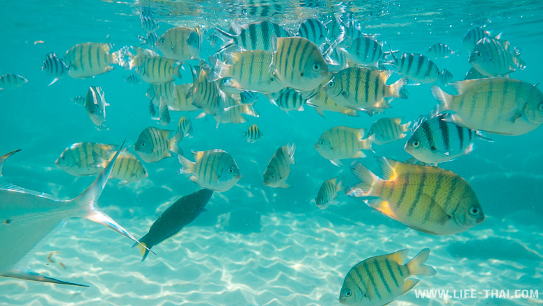 Коралловые рыбы Таиланда