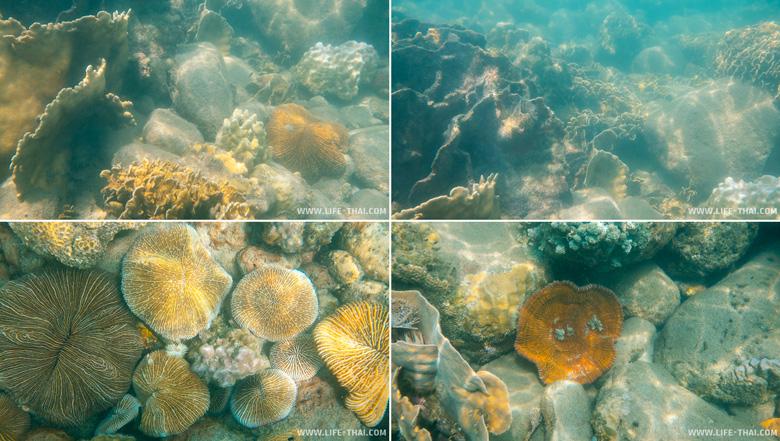 Подводный мир ко Куда в Таиланде