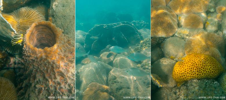 Подводный мир ко Куда. Дайвинг на острове
